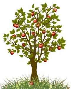 12494396-apple-tree